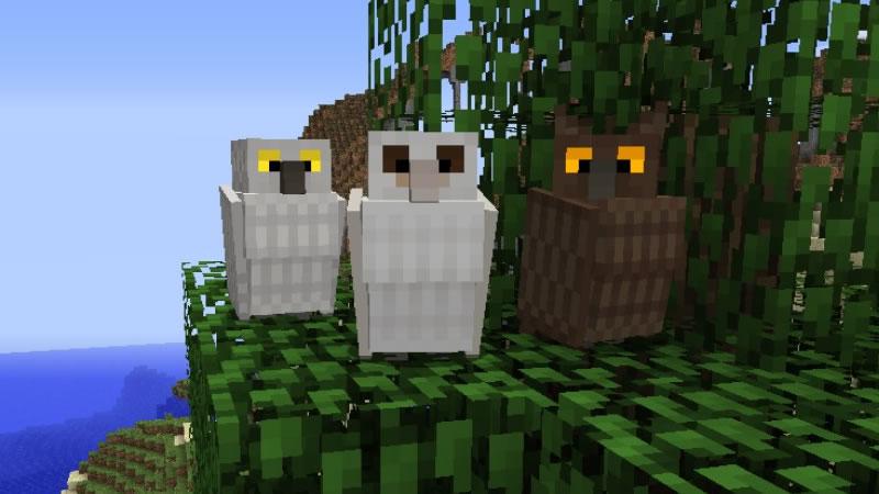Exotic Birds Mod Screenshot 3